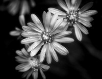 """Morning Dew"" By Doug Conrad - Previously Entered B&W"