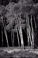 "HM Digital BW By Michael Greiner - ""Aspen"""