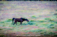 "HM Color Print By Rich Wright ""Horse in Foggy Field"""