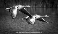 """Fly By"" By Ron Nicolls - Open Class Digital B&W Image of the Year"