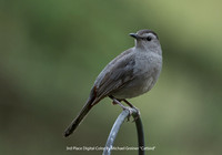 "3rd Place Digital Color By Michael Greiner ""Catbird"""