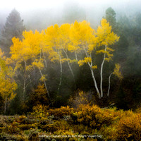 "2nd Place Digital Color By Rich Wright - ""Aspen Fog"""