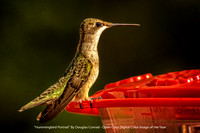 """Hummingbird Portrait"" By Douglas Conrad - Open Class Digital Color Image of the Year"