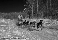 "HM Digital B&W By Bob Gillespie ""Leader of the Pack"""