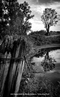 "HM Digital B&W By Randy Williams ""Reflecting Pool"""