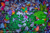 "HM Digital Color By Mike Griener ""Forest Floor"""
