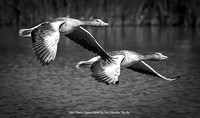 "2nd Place Digital B&W By Ron Nicolls ""Fly By"""